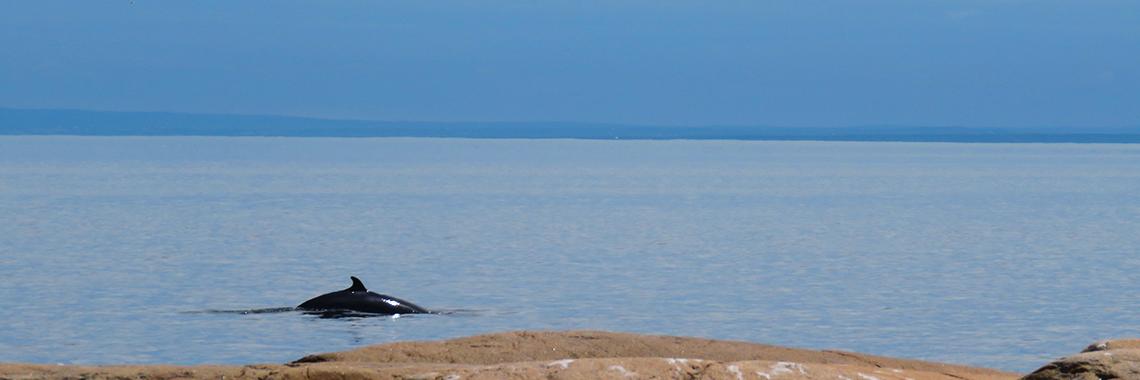 baleines près de la rive