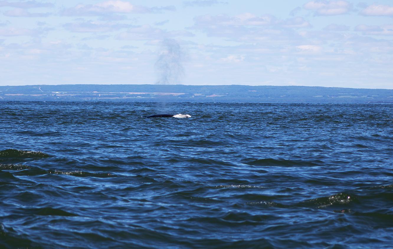 souffle de baleine