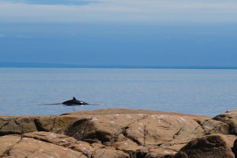 Baleine près de la rive